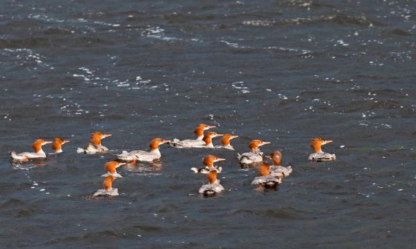 Birding at Maine Huts & Trails