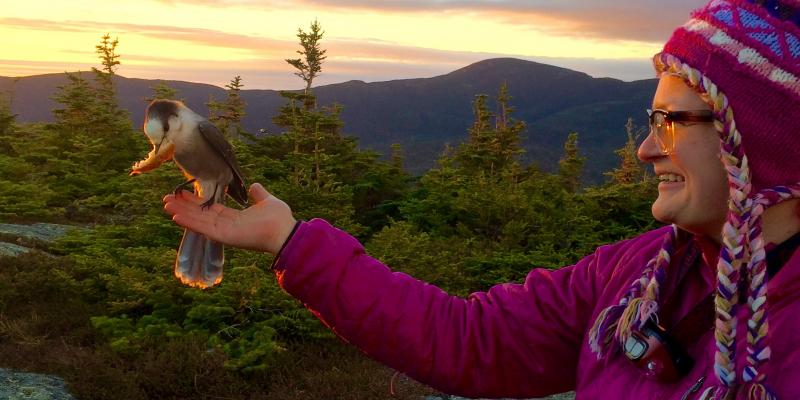 bird watching in Maine